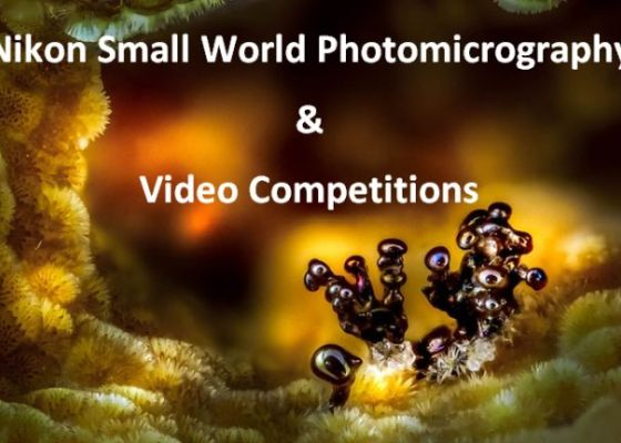 Nikon Small World Photomicrography and Video Competitions